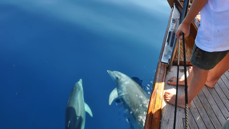 delfini_estate_20131
