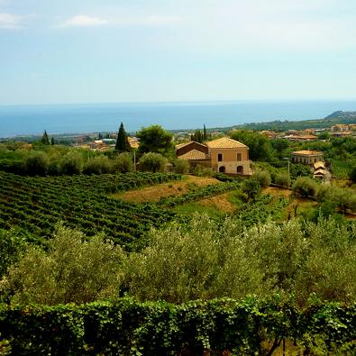 Тур дегустации вин